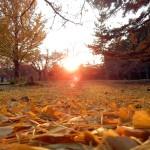マジェスティ 奈良公園紅葉ツーリング