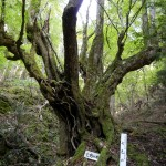 マジェスティ七色の木ツーリングin京丹波