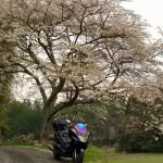 マジェスティ能勢妙見山お花見ツーリングin大阪