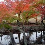 マジェスティ 秋の味覚マツタケうどん&奈良公園紅葉ツーリング