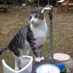 マジェスティ 猫のいる古民家カフェツーリングin兵庫