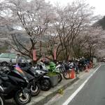 マジェスティ 千本桜の大野ダムさくら祭りツーリングin京都