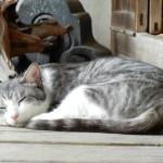マジェスティ 看板ネコとポニーがいる古民家カフェツーリングin兵庫