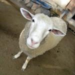 ジョグ 日本一小さい五月山動物園までプチツーリングin大阪府池田市