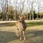 Z1000 鹿パラダイスの奈良公園ぷちツーリングin奈良県奈良市