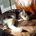 マジェスティ ねこ好きにはたまらない猫がいっぱい古民家cafeツーリングin兵庫丹波