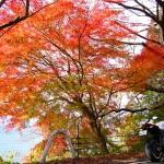 Z1000 琵琶湖一周びわいち紅葉ソロツーリングin滋賀県長浜市